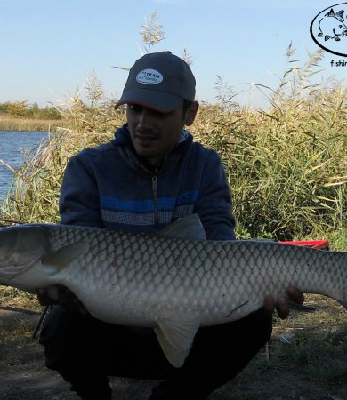 Serbia, Belo Blato – 12 kg