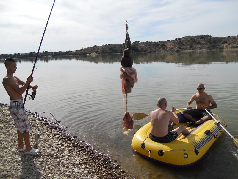 Planting for catfish on Ebro