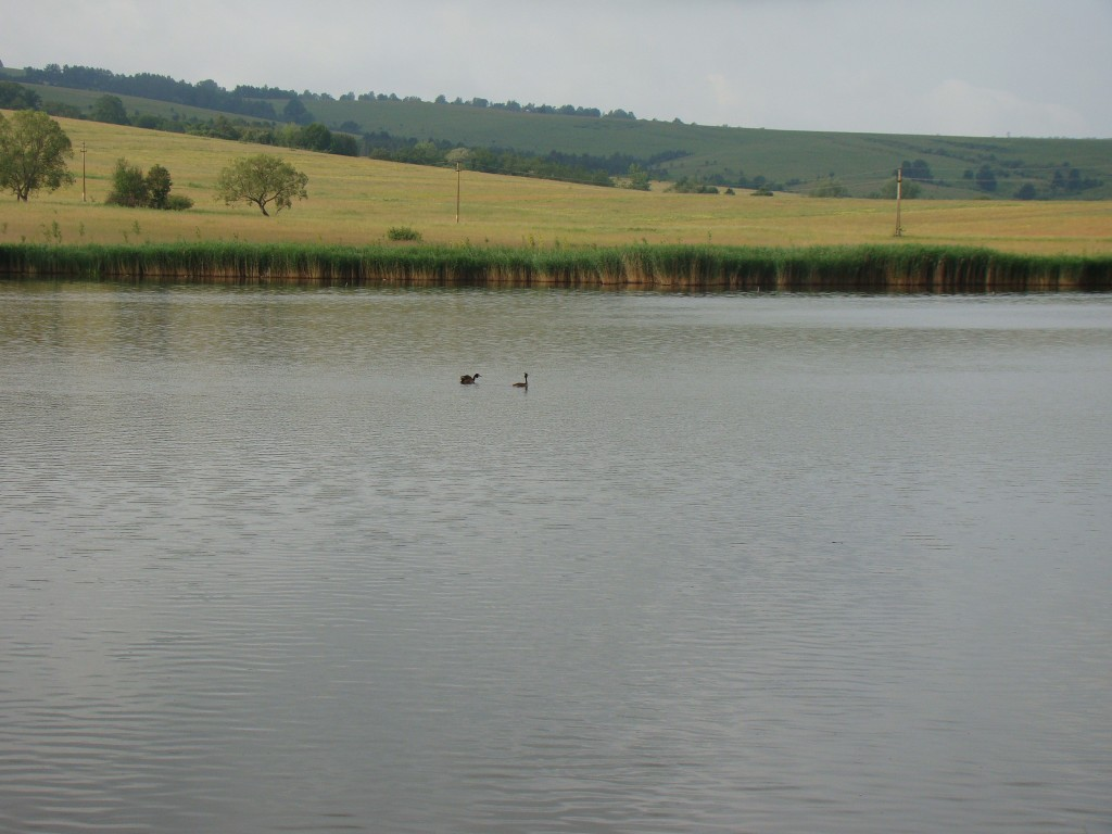 Pond Sânpaul or Tâncăbeştiul Transylvania, where was held the second edition of Carp Cup Plus
