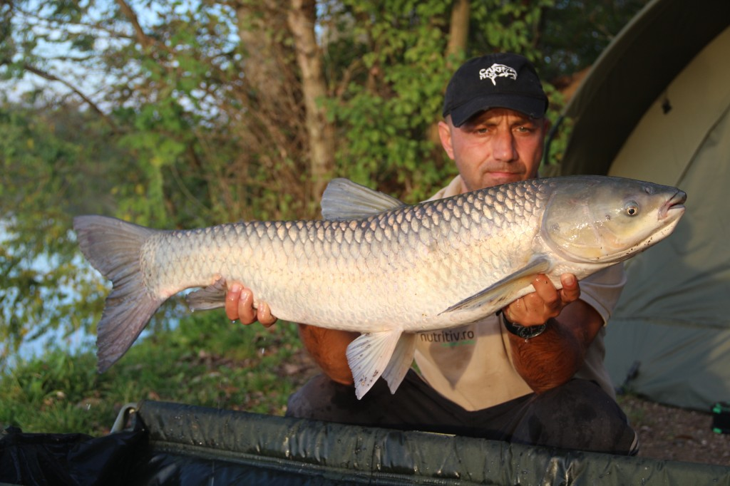 Mircea Rădulescu, Cosmin Miclosoni and Augustin Barac - catches of carp in the pond in Bosnia