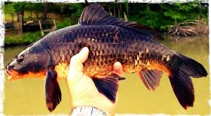 Zece-motive-pentru-care-nu-prinz-crap-team-idella-fishing3
