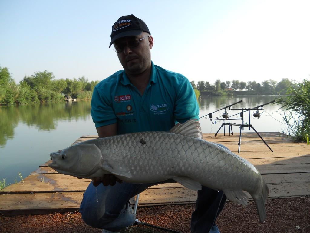 Amur prins urmând tactica de pescuit
