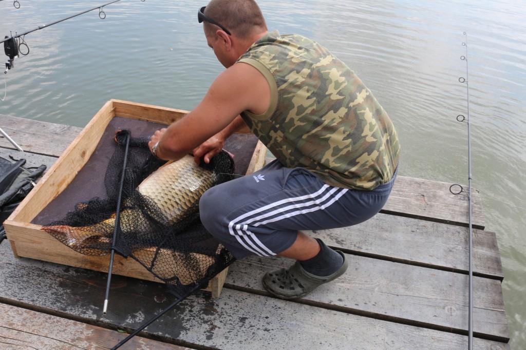 Mircea Rădulescu de la Team Idella la pescuit pe balta Mika Alas