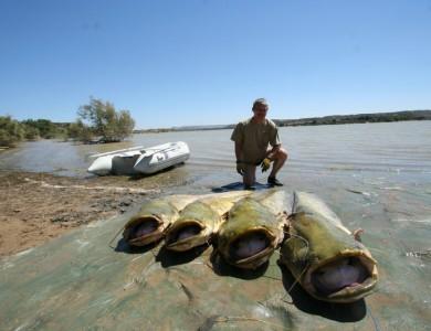 Pescuit pe Ebro – tarife si conditii de pescuit Team Idella